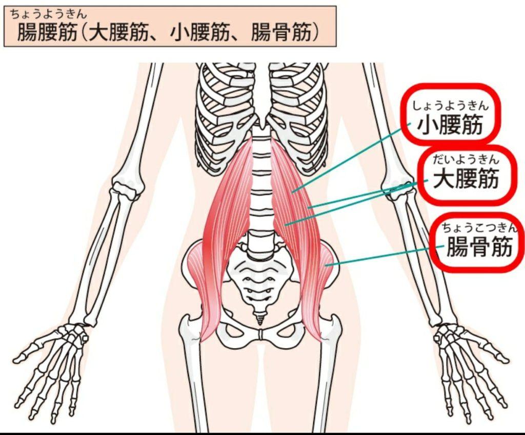 腸腰筋の重要性!